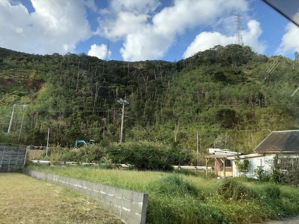 奄美大島の琉球松の枯れ