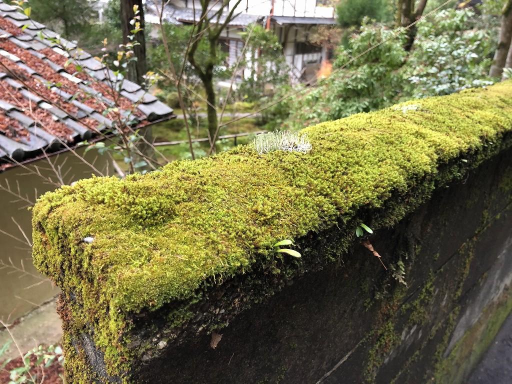 浄土宗吟松寺の壁2
