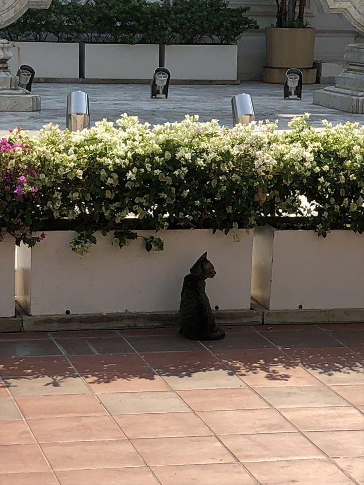 ワットパクナムの仏塔の日陰のネコ