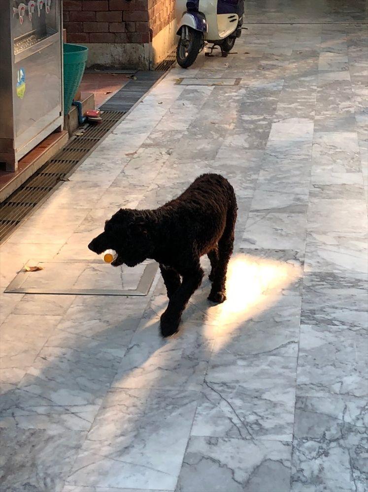ワットパクナムの犬