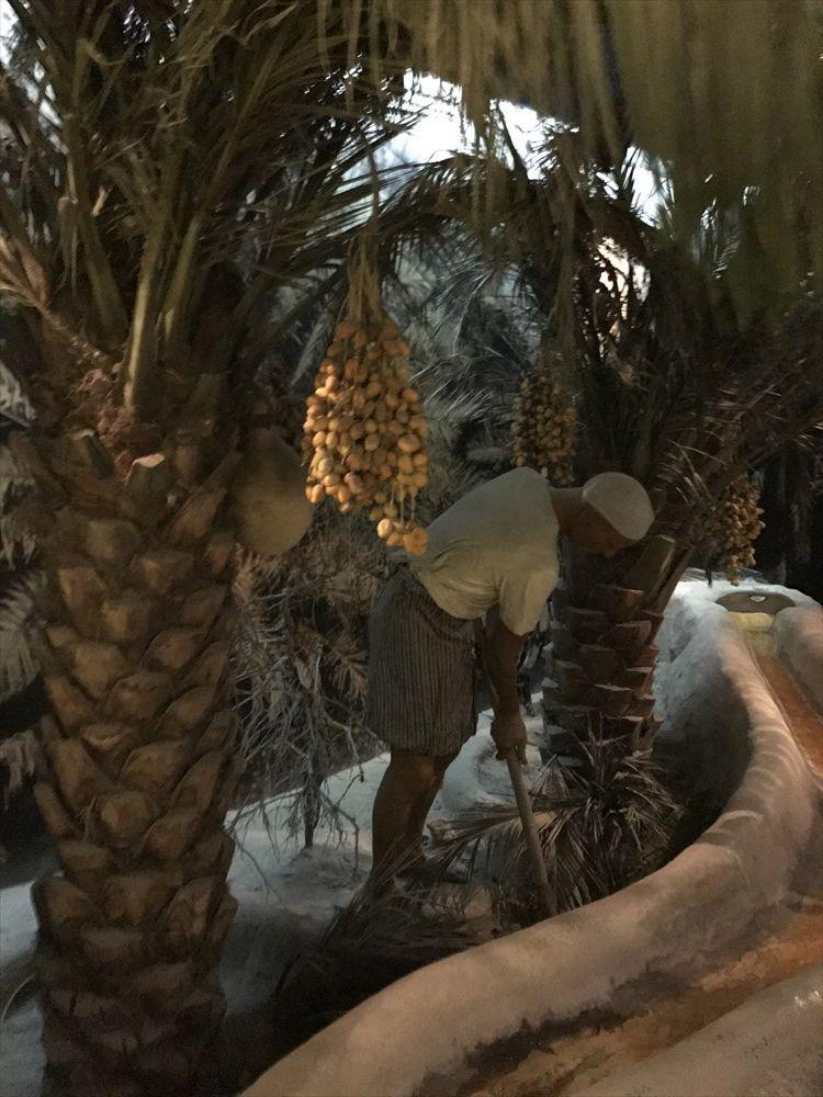 ドバイ博物館のデーツの木