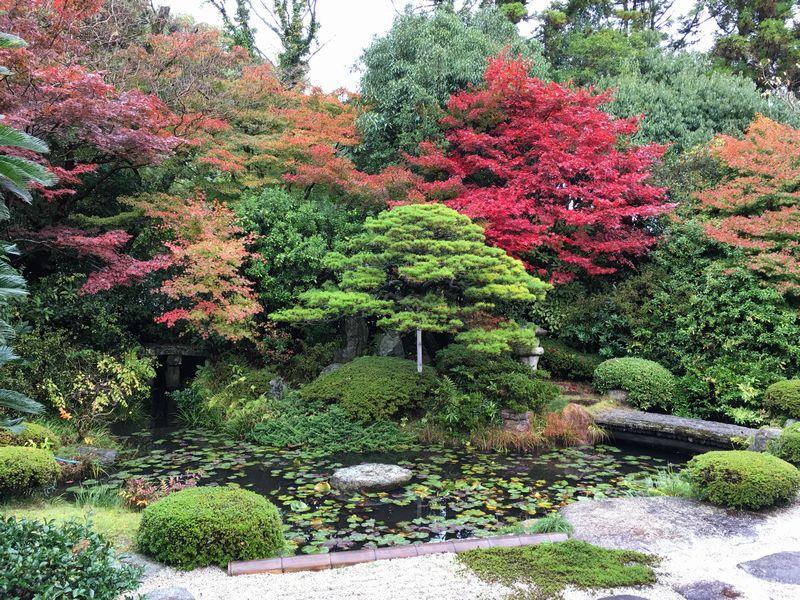 月照寺の庭の紅葉2