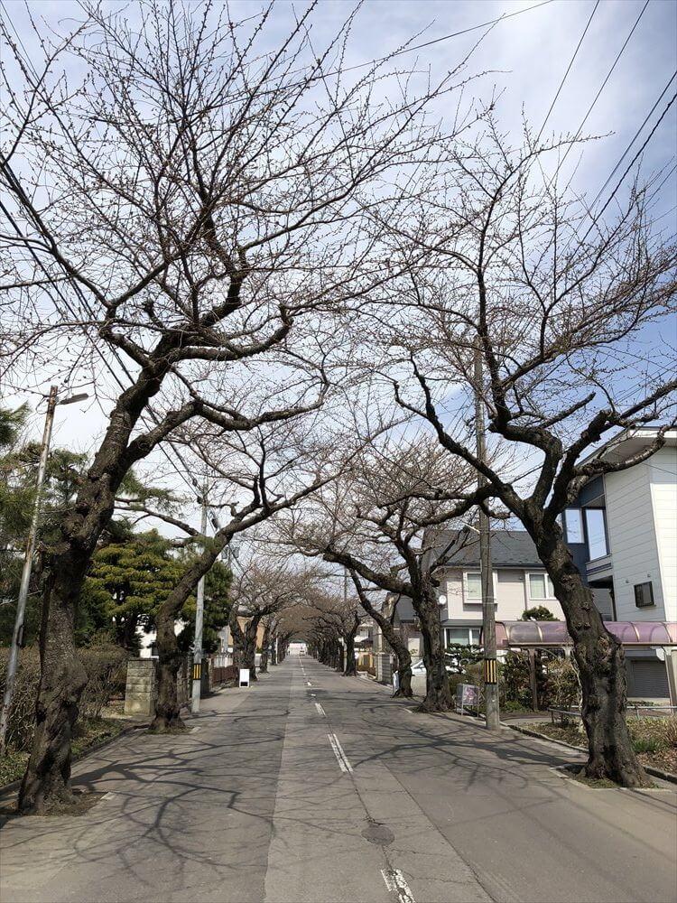 函館市の桜が丘通り