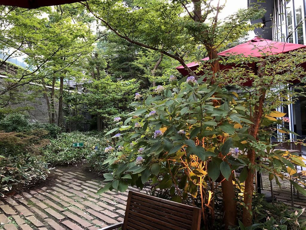 ハイアットリージェンシー箱根リゾート&スパの中庭の紫陽花