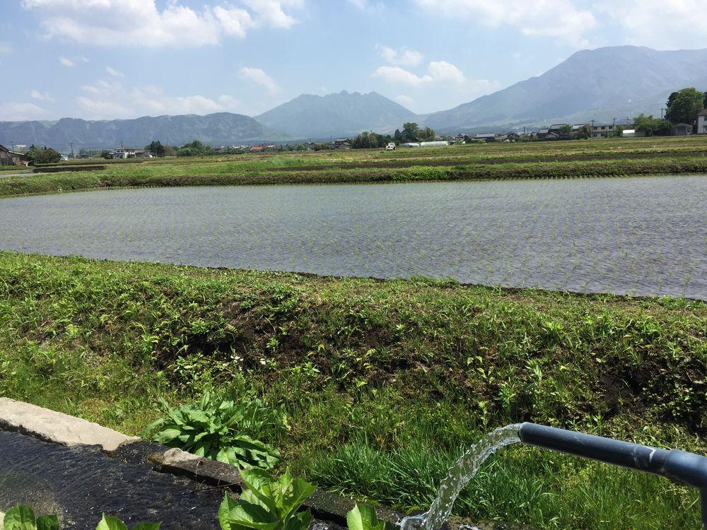 ヒバリカフェ周辺の田園風景画像