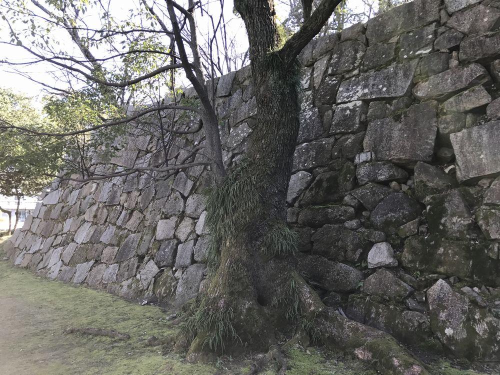 広島城の福島正則時代の打ち込みハギの石垣