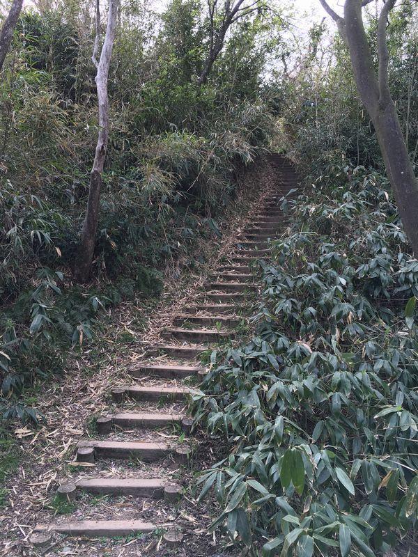 白鳥城址の急斜面2