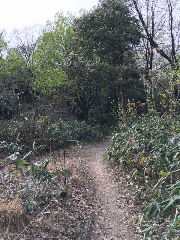白鳥城址の山道