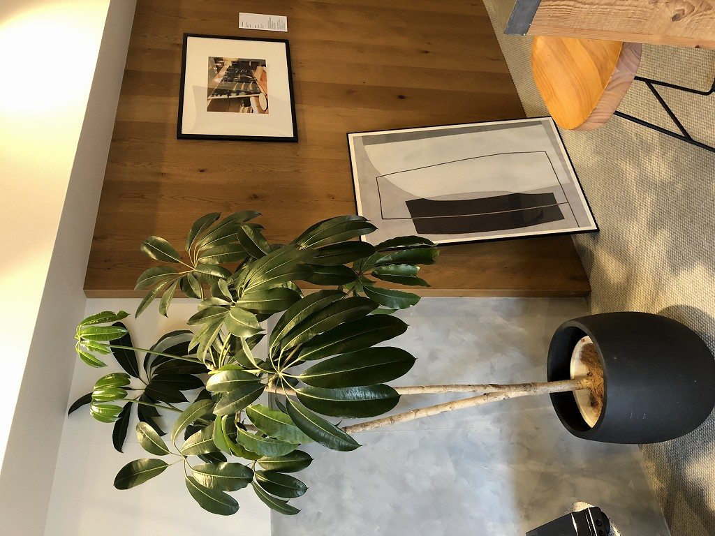 illi Shimokitazawaの301号室の植物1