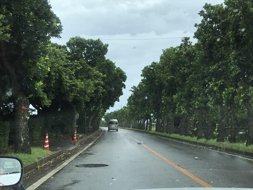 石垣空港のヤラブ並木道