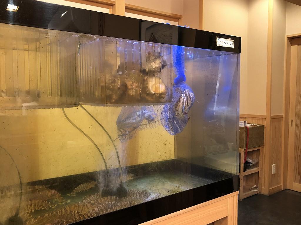 磐田の寿司好の水槽