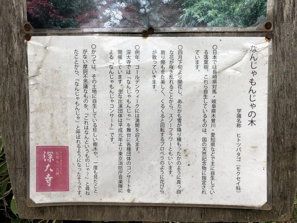 深大寺のなんじゃもんじゃの木2