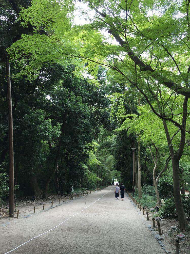 下鴨神社の糺の森