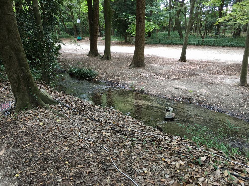 下鴨神社の糺の森の瀬見の小川