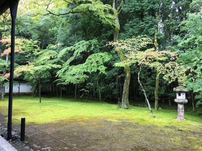 京都の大徳寺の高桐院の庭園
