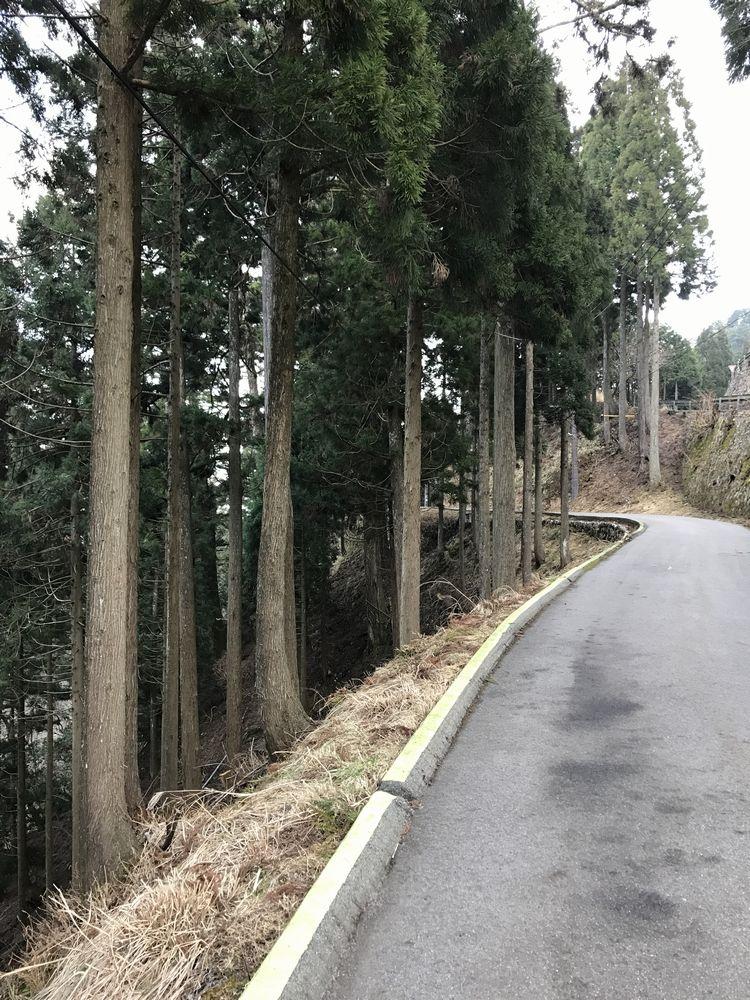 比叡山延暦寺からケーブル延暦寺駅までの杉並木