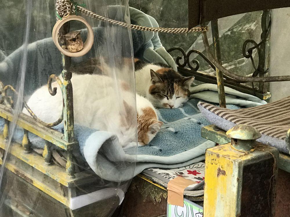若王子の猫2