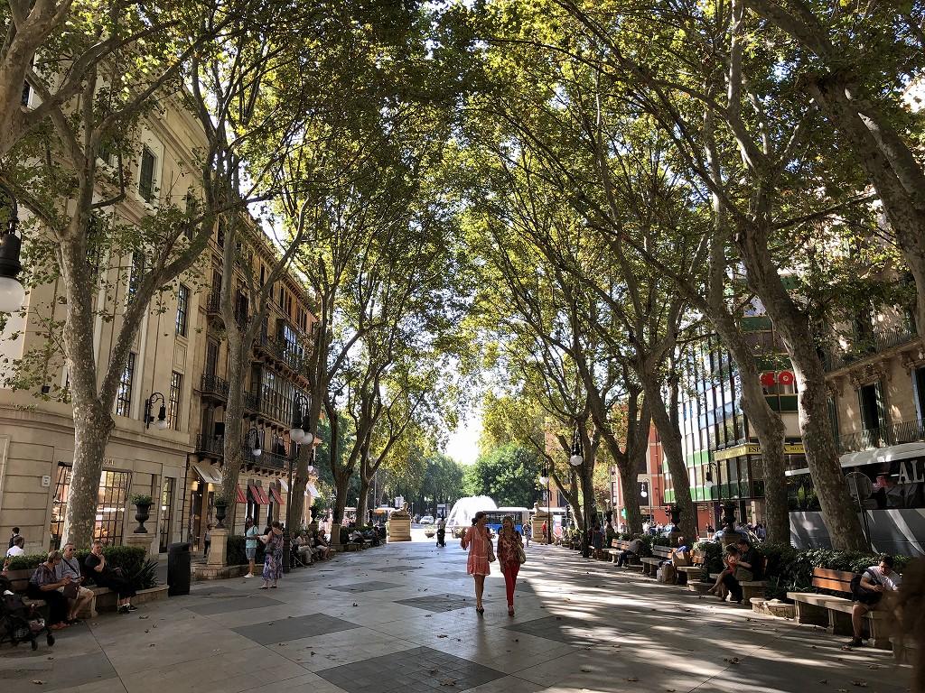 パルマ・デ・マヨルカの木陰道