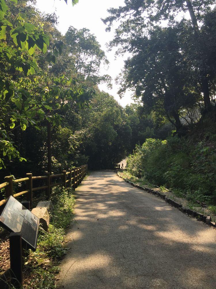 松山城県庁裏登城道の高低差