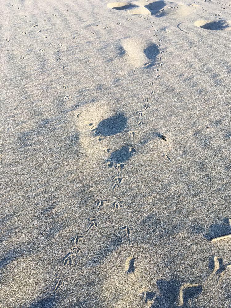 サンビーチ一ツ葉の犬の足跡