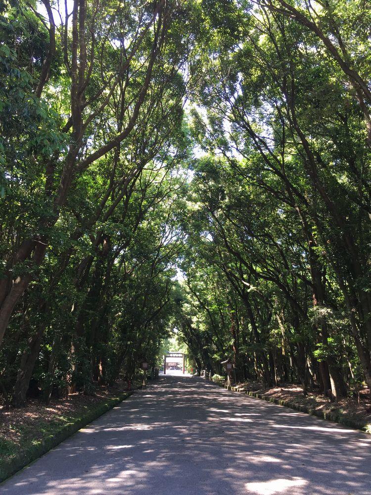 宮崎神宮の参道