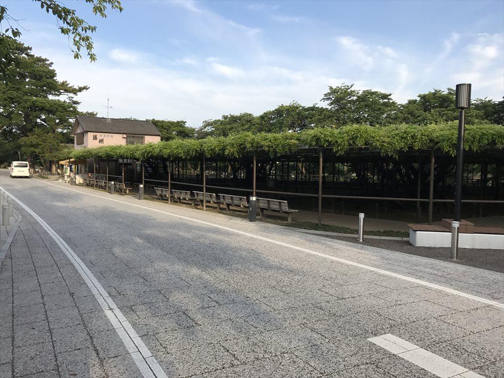 岡崎城の藤棚