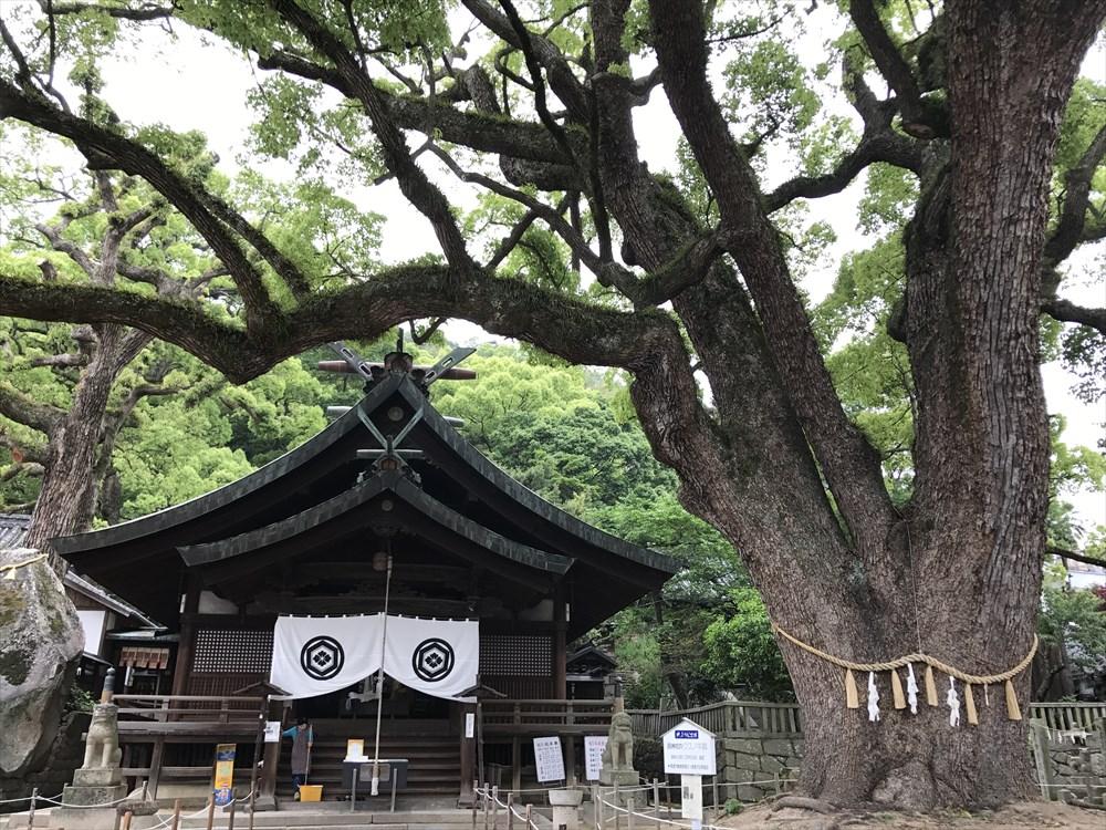 艮神社の大クスノキ2