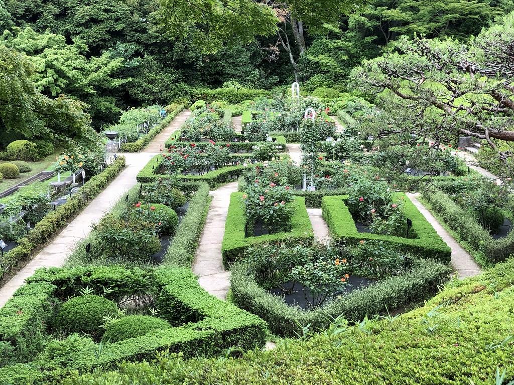 旧古河庭園の洋風庭園3