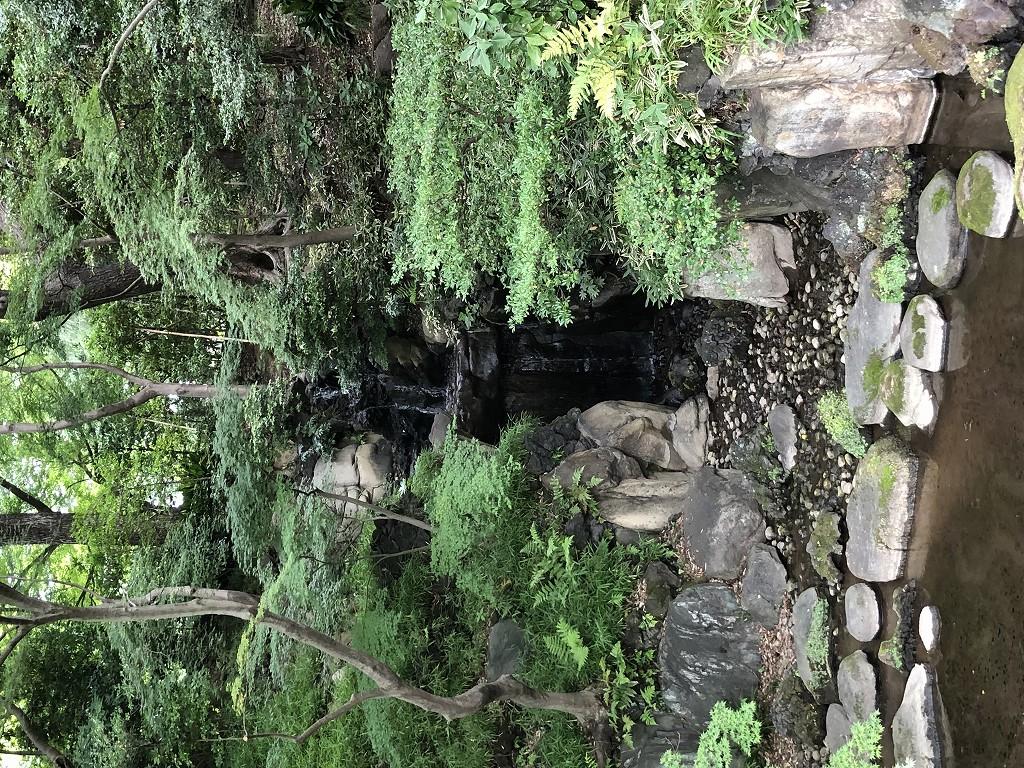 旧古河庭園の日本庭園2