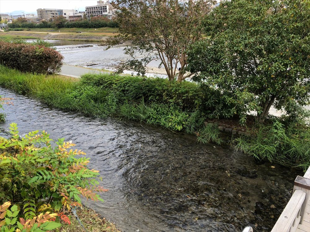 鴨川沿い1
