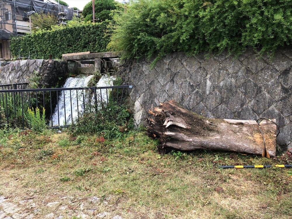 鴨川沿いの倒木