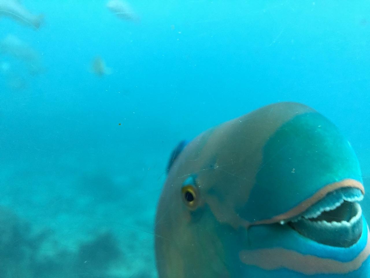 海中展望塔からお魚1