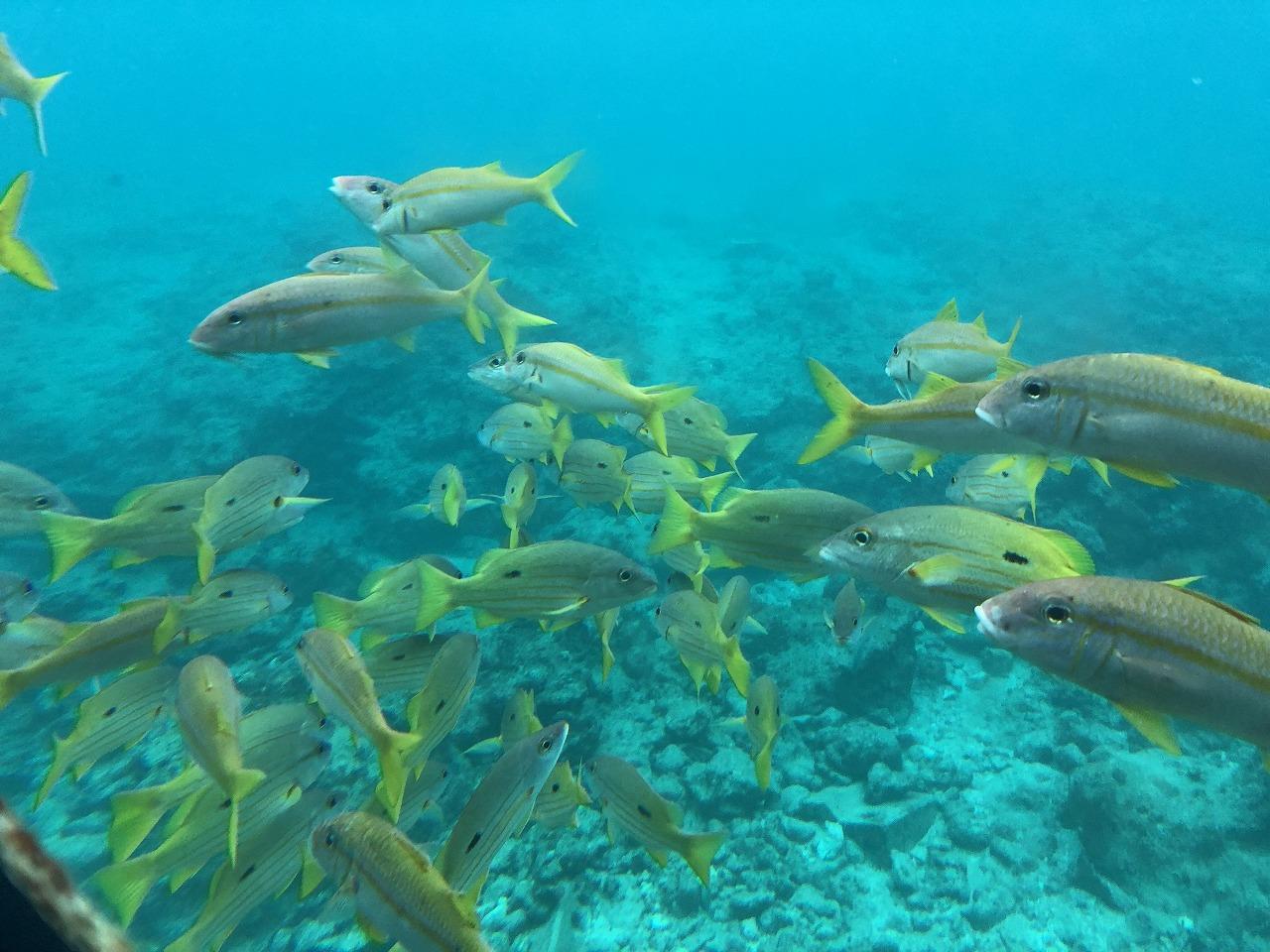 海中展望塔からお魚2