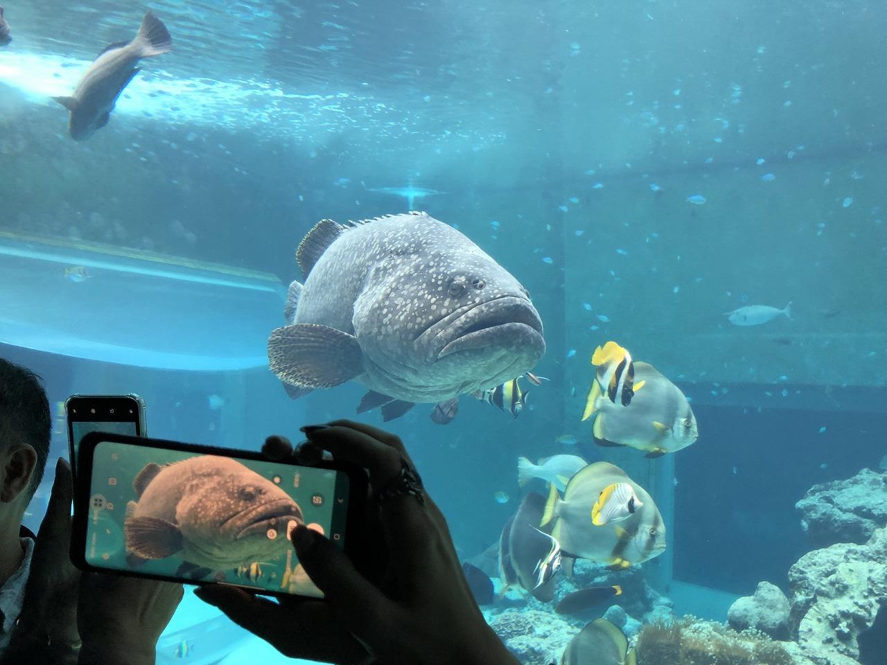 美ら海水族館の混雑を伝える写真