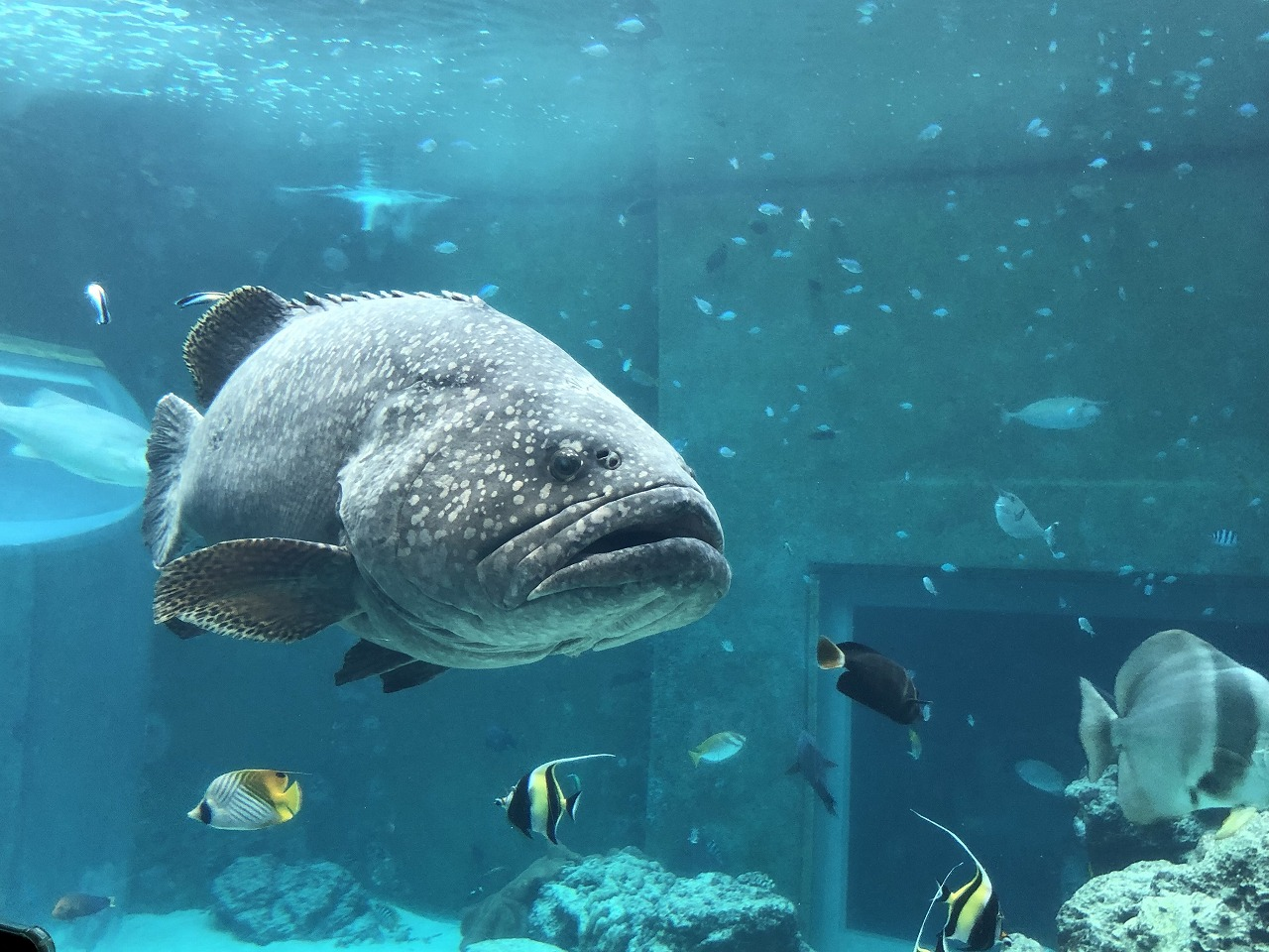 美ら海水族館のサンゴ礁の生き物