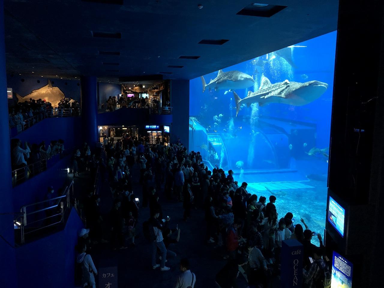 美ら海水族館の巨大水槽1
