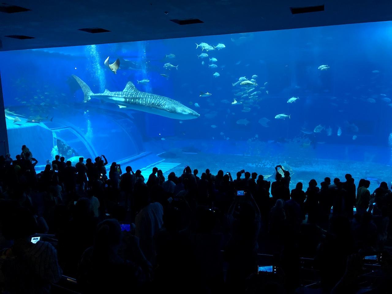 美ら海水族館の巨大水槽2