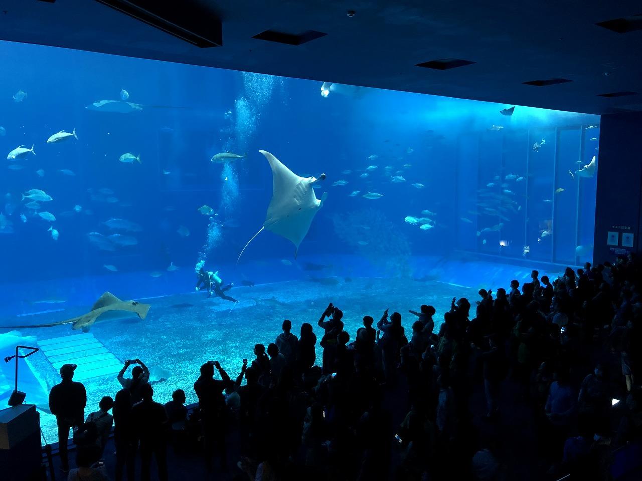美ら海水族館の巨大水槽3