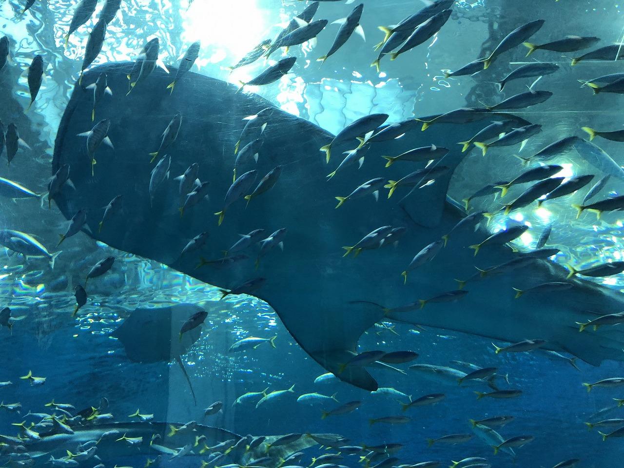 美ら海水族館のアクアルーム