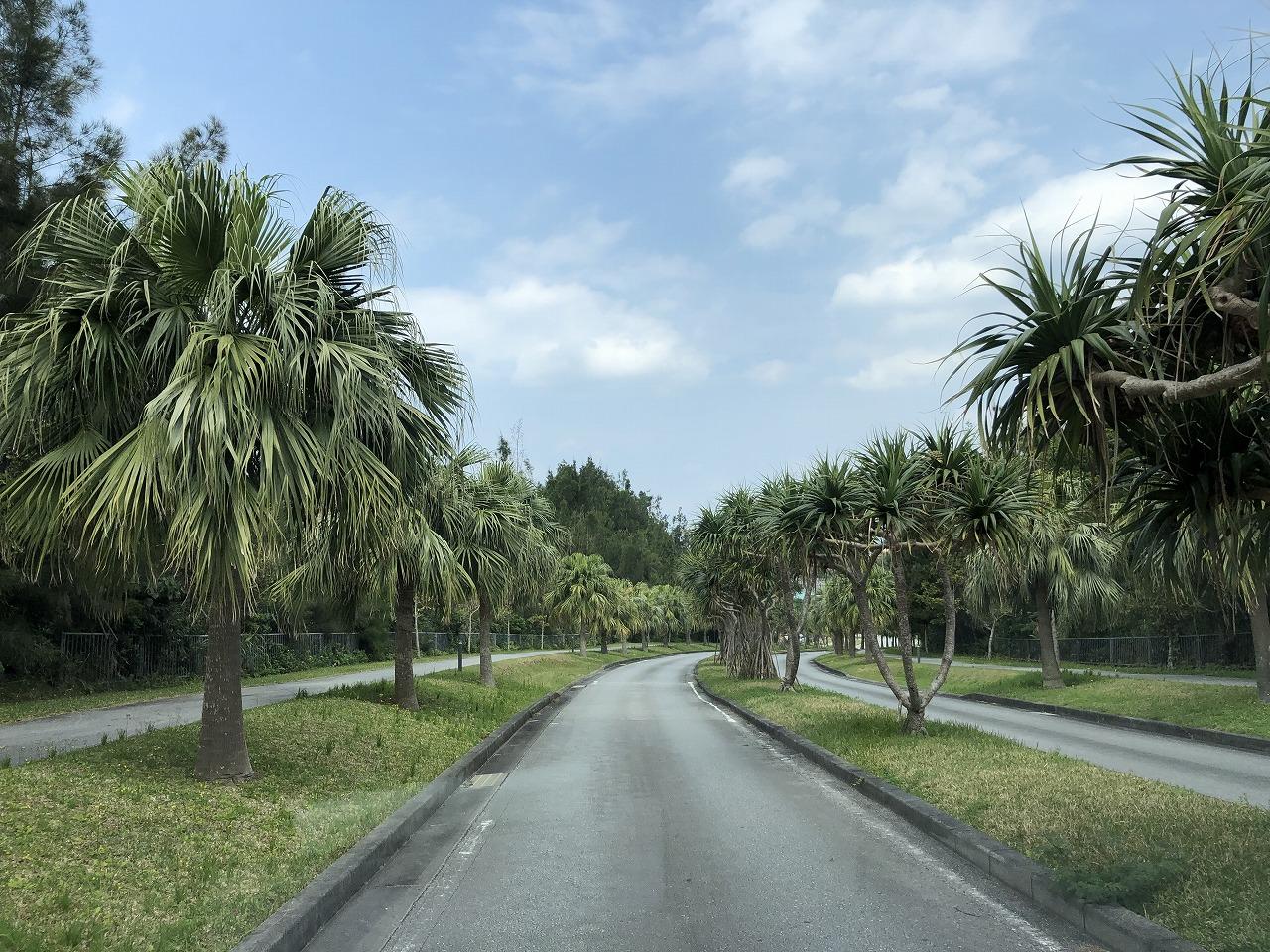 リッツカールトン沖縄の木並木
