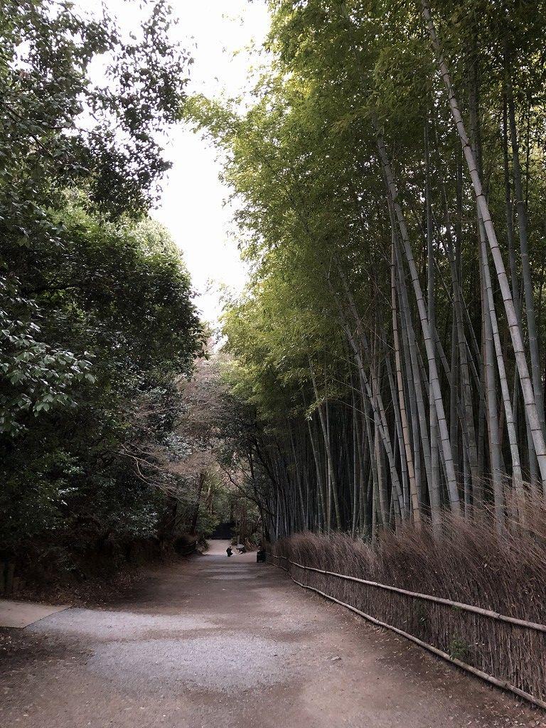 早朝の竹林の小径1