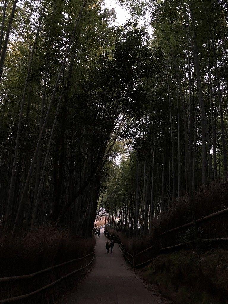 早朝の竹林の小径3