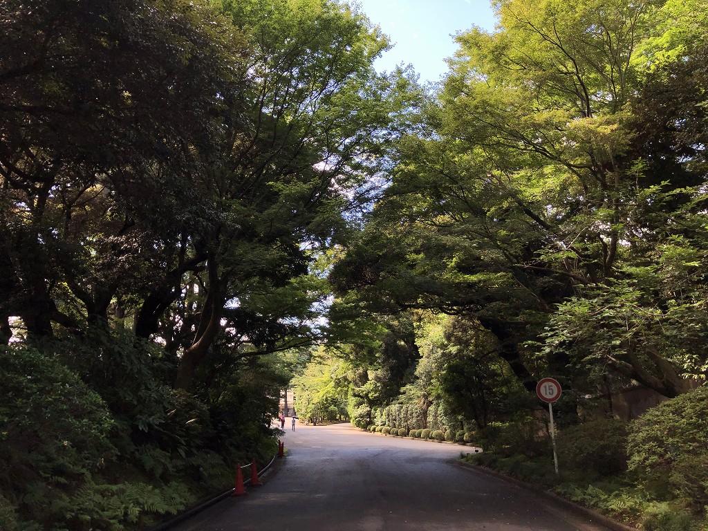 東京都庭園美術館の森