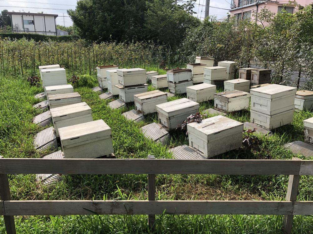 宍戸園カフェの養蜂場