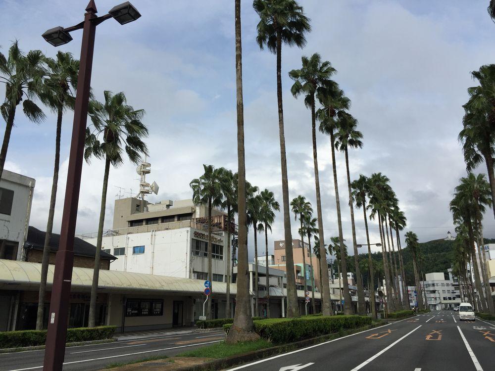 宇和島駅前のヤシの木