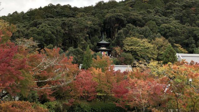 永観堂の放生池から多宝塔